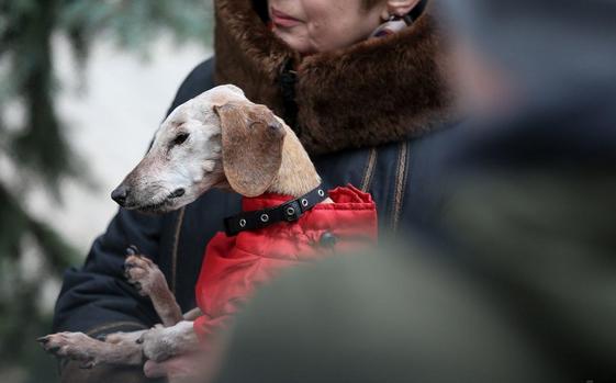 В Киеве зарегистрировали старейшую собаку Украины (фото) - today.ua