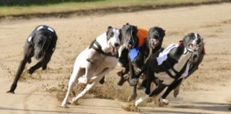 ТОП-5 самых быстрых собак в мире - today.ua