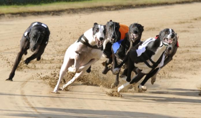 ТОП-5 найшвидших собак у світі - today.ua