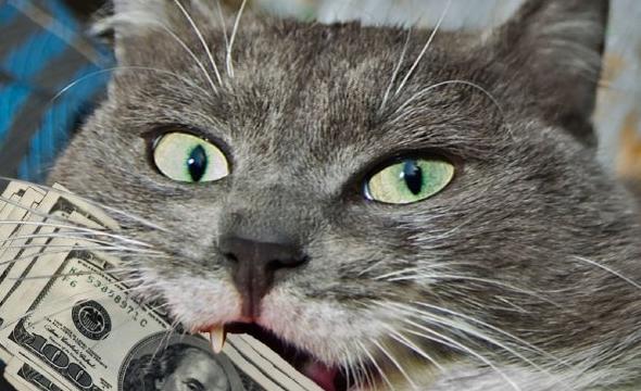 Езотерик розповів про особливості сірої породи котів