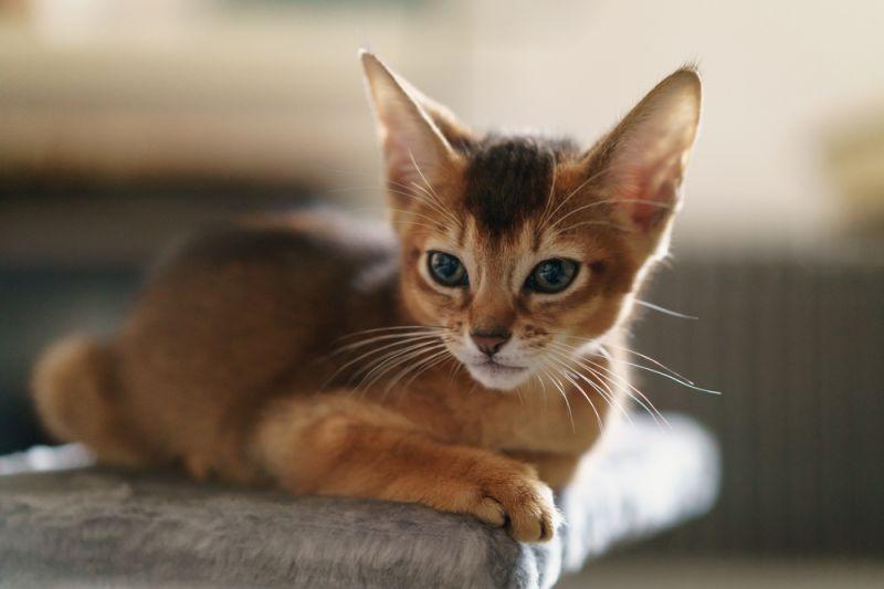 ТОП-3 пород кошек, которые лечат от болезней