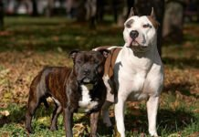 ТОП-3 найбільш непередбачуваних порід собак - today.ua