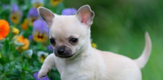 ТОП-5 короткошерстих порід собак - today.ua