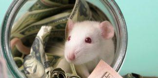 """Финансовый гороскоп на февраль: астролог назвала три знака Зодиака, на которых в феврале свалятся деньги"""" - today.ua"""