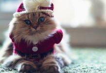 Породы котов для каждого знака Зодиака: какого питомца выбрать - today.ua