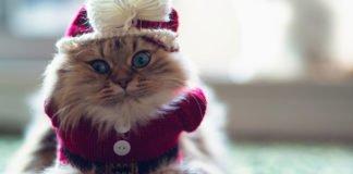 Породи котів для кожного знака Зодіаку: яку тварину обрати - today.ua