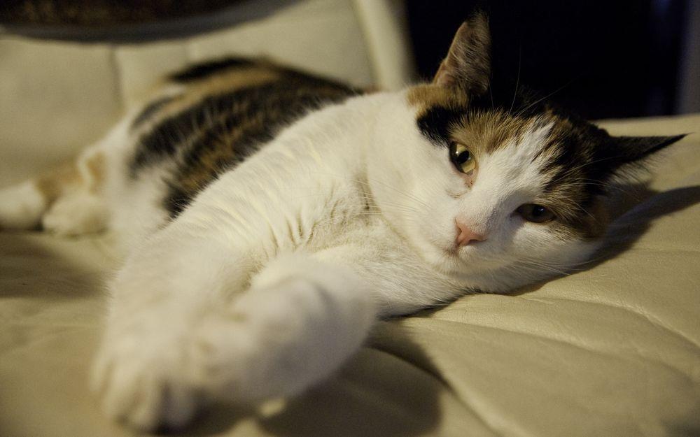 Езотерик назвав породи котів, які притягують до господарів негативну енергію