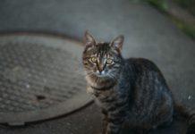 Езотерик розповів, чому дуже добре завести кошеня з вулиці - today.ua