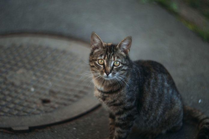 Эзотерик рассказал, почему очень хорошо приютить котенка с улицы - today.ua