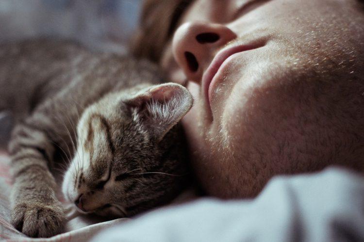 Езотерик розповів, чому дуже добре завести кошеня з вулиці