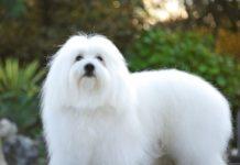 ТОП-5 найбільш екзотичних порід собак - today.ua