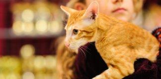 Енергетичні вампіри: Езотерик назвав породи котів, які відбирають у своїх господарів енергію - today.ua
