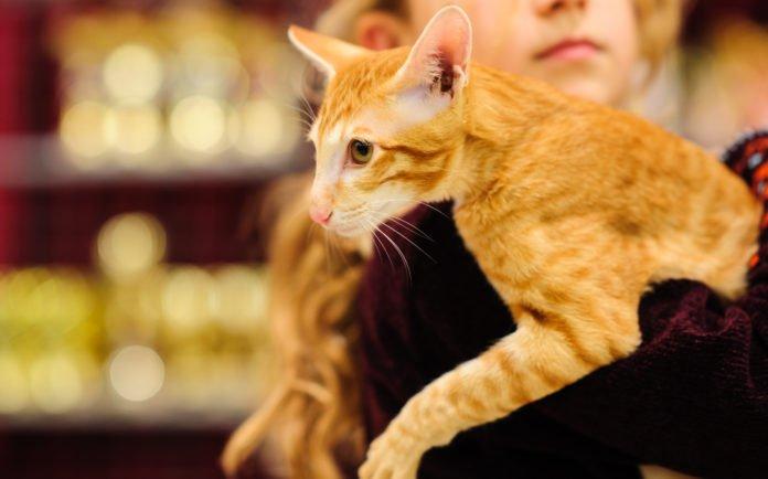 Энергетические вампиры: Эзотерик назвал породы котов, которые отбирают у своих хозяев энергию - today.ua