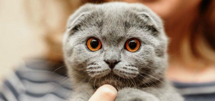 """Помощник &quotслуги народа"""" задекларировал своего кота как &quotдвижимое имущество"""" - today.ua"""