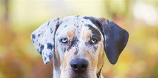 ТОП-5 порід собак з найекзотичнішим забарвленням - today.ua