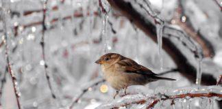 Похолодание до -13: синоптики рассказали, когда в Украину придет экстремальная зима - today.ua