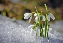 Цветущие розы и подснежники: синоптики удивили аномальным прогнозом погоды - today.ua
