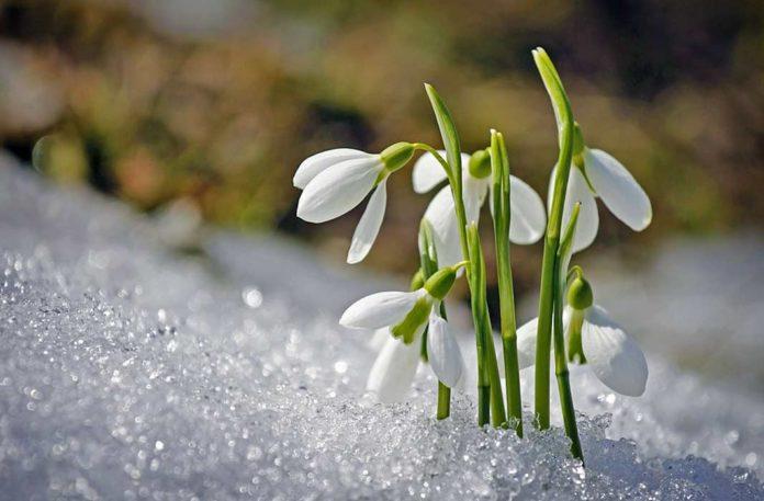 Квітучі троянди і проліски: синоптики здивували аномальним прогнозом погоди