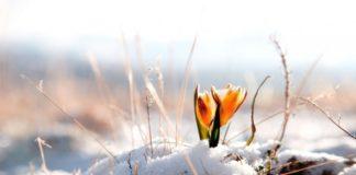 """Україну замете снігом: синоптики розповіли, коли очікувати погіршення погоди """" - today.ua"""
