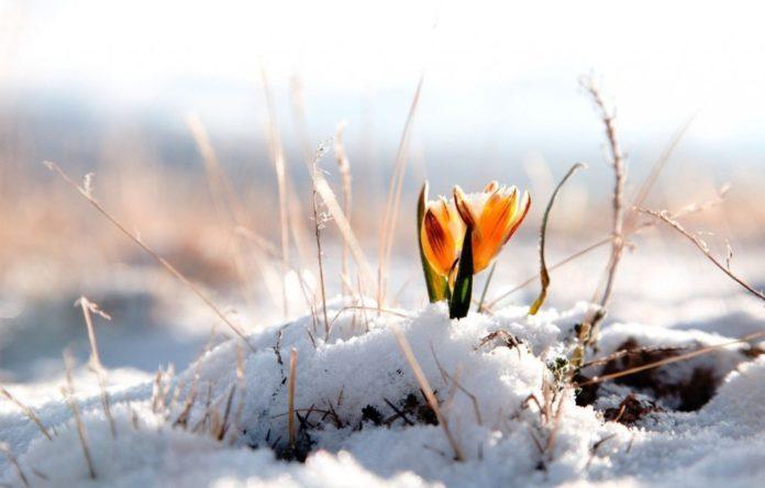 Україну замете снігом: синоптики розповіли, коли очікувати погіршення погоди - today.ua