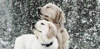 Снегопады и сильные порывы ветра: синоптики прогнозируют ухудшение погоды на ближайшую неделю - today.ua