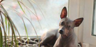 ТОП-3 найбільш лагідних та уважних порід собак - today.ua