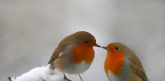 Зима відступає: синоптики здивували прогнозом погоди після новорічних свят - today.ua