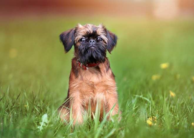 Вызывают улыбку: ТОП-5 самых смешных пород собак - today.ua