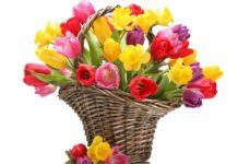 «Букетний» етикет: які квіти подарувати на 8 Березня мамі, дружині і колегам - today.ua