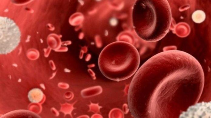 Як група крові впливає на тривалість життя: експерти дали відповідь - today.ua
