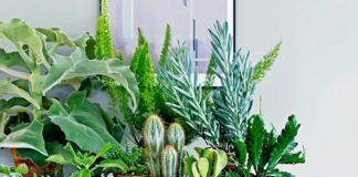 Кімнатні квіти – вороги багатства: які рослини приносять бідність в дім - today.ua