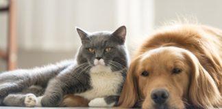 """Ваше ім'я допоможе обрати домашнього улюбленця: езотерики розповіли про """"сумісність"""" з тваринами - today.ua"""