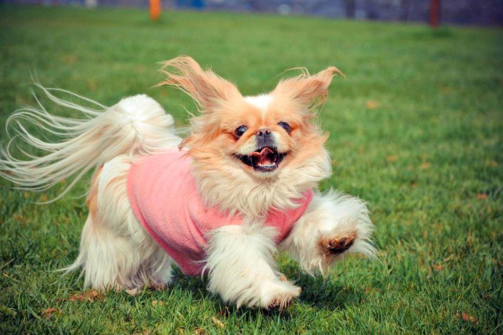 ТОП-5 найпопулярніших порід собак в 2020 році  - today.ua