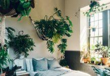 Комнатные цветы для спальни: 5 растений, способствующих улучшению сна - today.ua