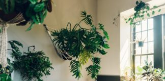 """Кімнатні квіти для спальні: 5 рослин, що сприяють поліпшенню сну"""" - today.ua"""