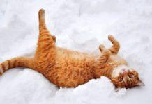 5 лютого: який сьогодні день і навіщо спостерігати за котами - today.ua
