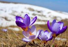 В Україні нарешті потепліє: синоптики розповіли про погоду на найближчі дні - today.ua