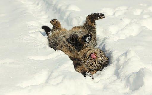 5 лютого: який сьогодні день і навіщо спостерігати за котами