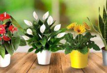 Топ-3 комнатных растений, которые привлекают в дом любовь и семейное счастье - today.ua