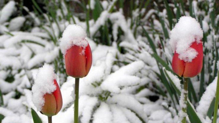 В Україну йде потепління: синоптики розповіли, коли закінчиться зима  - today.ua
