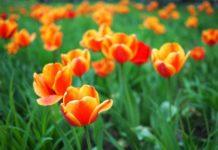 Какой будет весна в Украине: синоптики дали неутешительный прогноз погоды - today.ua