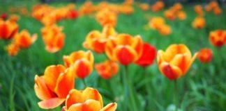 Якою буде весна в Україні: синоптики дали невтішний прогноз погоди - today.ua