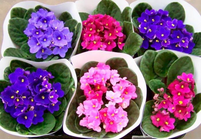Езотерики назвали кімнатні рослини, які гарантують сімейне щастя