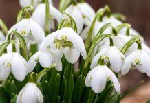 28 февраля: какой сегодня праздник и что нужно делать в этот день - today.ua