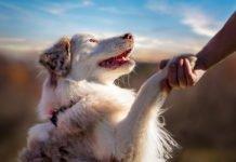 ТОП-3 породи собак, які за останні 100 років змінилися до невпізнання - today.ua