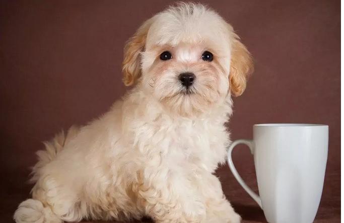 ТОП-5 незвичайних порід собак, які з'явилися нещодавно