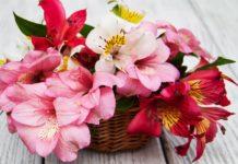 Мають погану ауру: які квіти дарують тим, від кого хочуть позбутися - today.ua