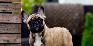 Неможливо впоратися: ТОП-5 порід собак з упертим характером - today.ua