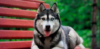 ТОП-5 найкрасивіших порід собак - today.ua