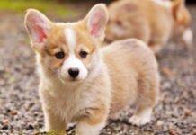 """Названо найдорожчі породи собак у світі: """"Озолотять і ощасливлять"""" - today.ua"""